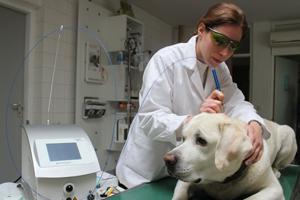 Laserbild-Tierklinik