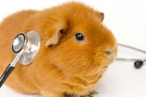 Tiergesundheit steht an erster Stelle.
