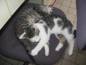 Katzenpatschwork