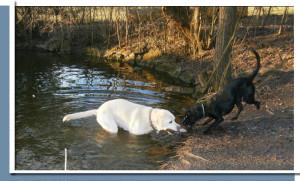 Hunde im Wasser