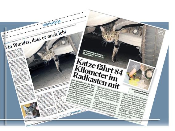 Katze fährt 84 km in Radkasten mit