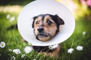 Kastration beim Hund: Dr. Haberkern.