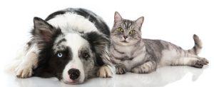 Erste Hilfe bei Katzen und Hunden, was rät der Tierarzt in Heilbronn?